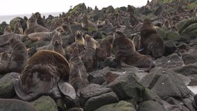 Lobos marinos de Notern metrajes