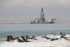 Lobos marinos del cabo en la bahía de Walvis Imágenes de archivo libres de regalías