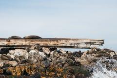 Lobos marinos del cabo en naufragio de príncipe Port Imagen de archivo