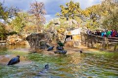 Lobos marinos que alimentan la demostración en un parque zoológico Imagen de archivo