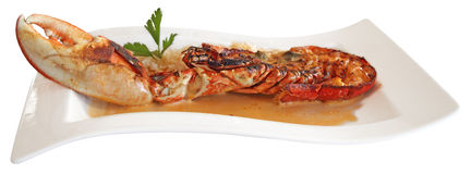 Lobste in a sauce Stock Photography