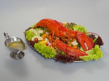 Lobster 1 royalty free stock images