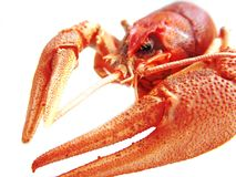 Lobster Stock Image