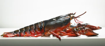 Lobster. Side view of a full grown lobster royalty free stock photos