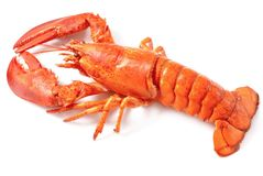 Lobster royalty free stock images