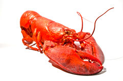 Lobster Royalty Free Stock Photos