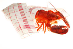 Lobster. In a cloth stock image