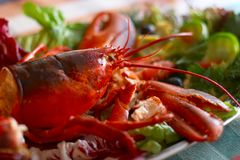The lobster Royalty Free Stock Photo