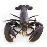 Lobster Stock Images