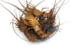 Lobster. Freshly caught lobsters on the dish Stock Photography