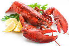Lobster. With parsley and lemon slices over white Royalty Free Stock Photos