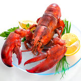 Lobster. With parsley and lemon slices on dish royalty free stock photography