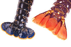 Lobster. Tail Lobster placed on a white background Royalty Free Stock Image