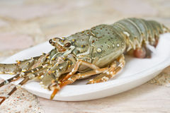 Lobster. On white plate close up Royalty Free Stock Photos