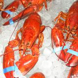 Lobster. Fresh pacific lobster chilled on ice stock images