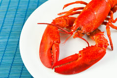 Lobster Stock Photos