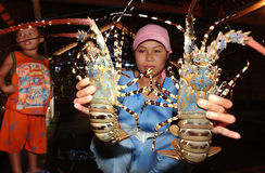 Lobster Royalty Free Stock Image