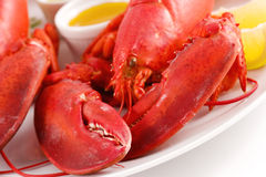 Free Lobster Royalty Free Stock Image - 4414426