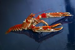 Lobster. A southern delight food Stock Photo