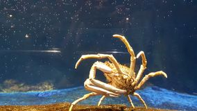 Lobster in aquarium Royalty Free Stock Images