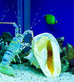 Lobster. Aquarium with lobster and others Royalty Free Stock Photography