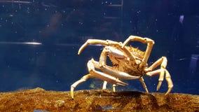Lobster in aquarium Stock Photography