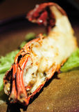 Lobster in baked cheese. Served on lettuce Royalty Free Stock Images