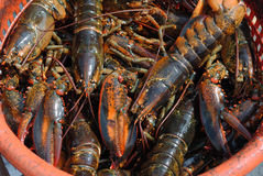 Lobster Basket Stock Photography