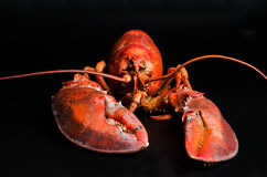 Lobster on black Stock Photos