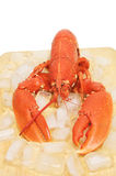 Lobster on a board with ice royalty free stock photography