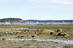 Lobster Boats in Harbor at Low Tide Royalty Free Stock Images