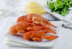 Lobster boiled Royalty Free Stock Photos