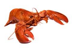 Lobster. Boiled lobster on white background stock image