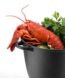Lobster and cabbage Royalty Free Stock Images