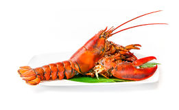Lobster chinese luxury seafood on dish isolated on white Royalty Free Stock Images