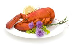 Lobster & Chives Stock Photography