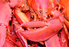 Lobster claw Royalty Free Stock Photography