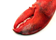 Lobster Claw Stock Images