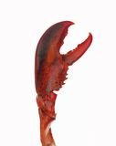 Lobster claw Royalty Free Stock Photos