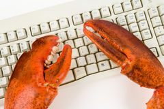 Lobster Claw and Computer Keyboard Stock Photos