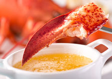 Lobster Claw with Melted Butter. A delicious atlantic lobster claw with melted garlic butter stock photography