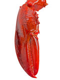 Lobster claw  on white Royalty Free Stock Photos