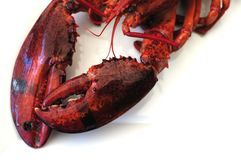 Lobster claws Royalty Free Stock Photos