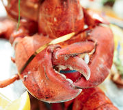 Lobster claws Royalty Free Stock Photography