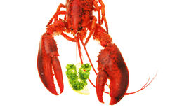Lobster claws and head Stock Image