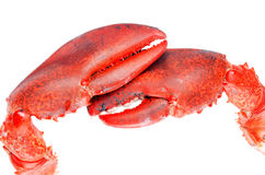 Lobster claws isolated on white background close up Royalty Free Stock Photography