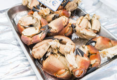 Lobster claws on a silver tray with euro sign in Paris market Stock Photography