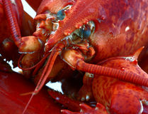 Lobster close up Stock Images