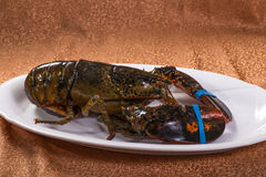 The lobster Stock Image