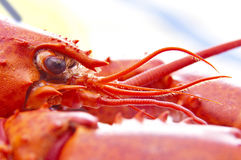 Lobster close up Royalty Free Stock Photo